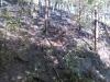 Požár lesa 4.8.2015